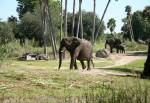 Kilimanjaro Safaris in Africa at Disney Animal Kingdom