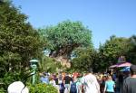The Tree of Life in Discovery Island at Disney Animal Kingdom