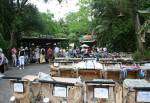 Pin Station Discovery Island at Disney's Animal Kingdom