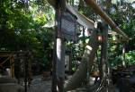 The Swiss Family Robinson Tree House in Adventureland at Magic Kingdom
